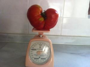 Çok İri Sırık kırmızı domates
